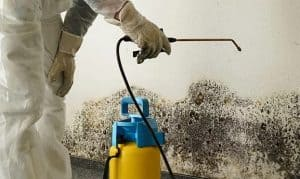 Paradise Valley Arizona Mold Remediation and Restoration Services