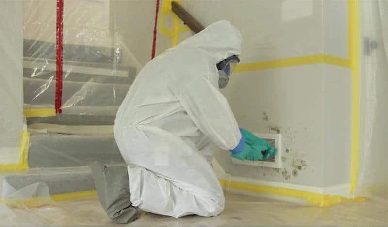 Avondale Mold Remediation & Restoration