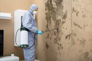 Chandler Arizona Mold Remediation and Restoration