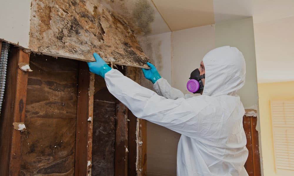 Glendale Arizona Mold Remediation and Restoration