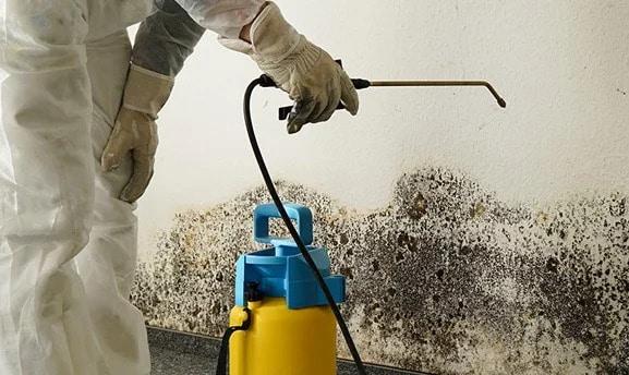 Mold Remediation Company in Mesa
