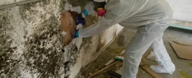 Mold Remediation Company in Sun City