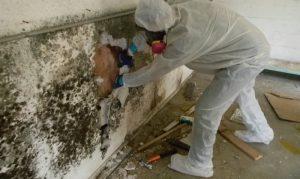 Scottsdale Arizona Mold Remediation and Restoration
